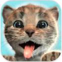 小猫大冒险